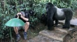 tourist gorilla